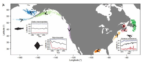 Species assemblage shifts with climate velocity in US and Canadian waters, with American lobster, Alaskan cod, and big skate as examples.  From Pinsky et al. (2013).