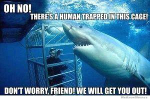 misunderstood-shark-2
