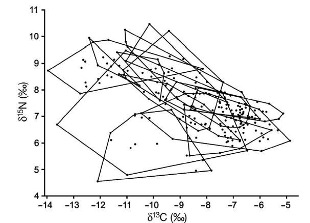 "Figure 3 from Vaudo and Heithaus 2011. ""All elasmobranch individuals plotted in isotopic niche space. Black lines outline the convex hulls of the individual groups illustrating a high degree of overlap in isotopic niche space"""