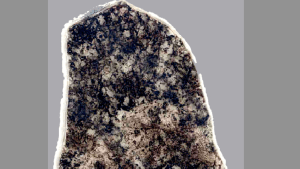 Fossilized bacteria community in a section of a 1.8 billion year old rock. (Photo credit: Schopf et al. 2015, PNAS)
