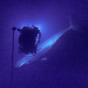 Sperm whale captured at 598 meter (1,962 ft) depth by the ROV Hercules. (Photo Credit: Ocean Exploration Trust)
