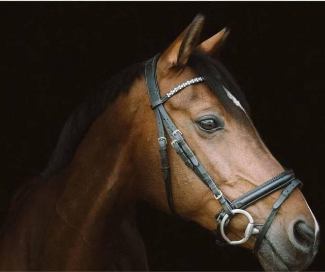 Head shot of a horse