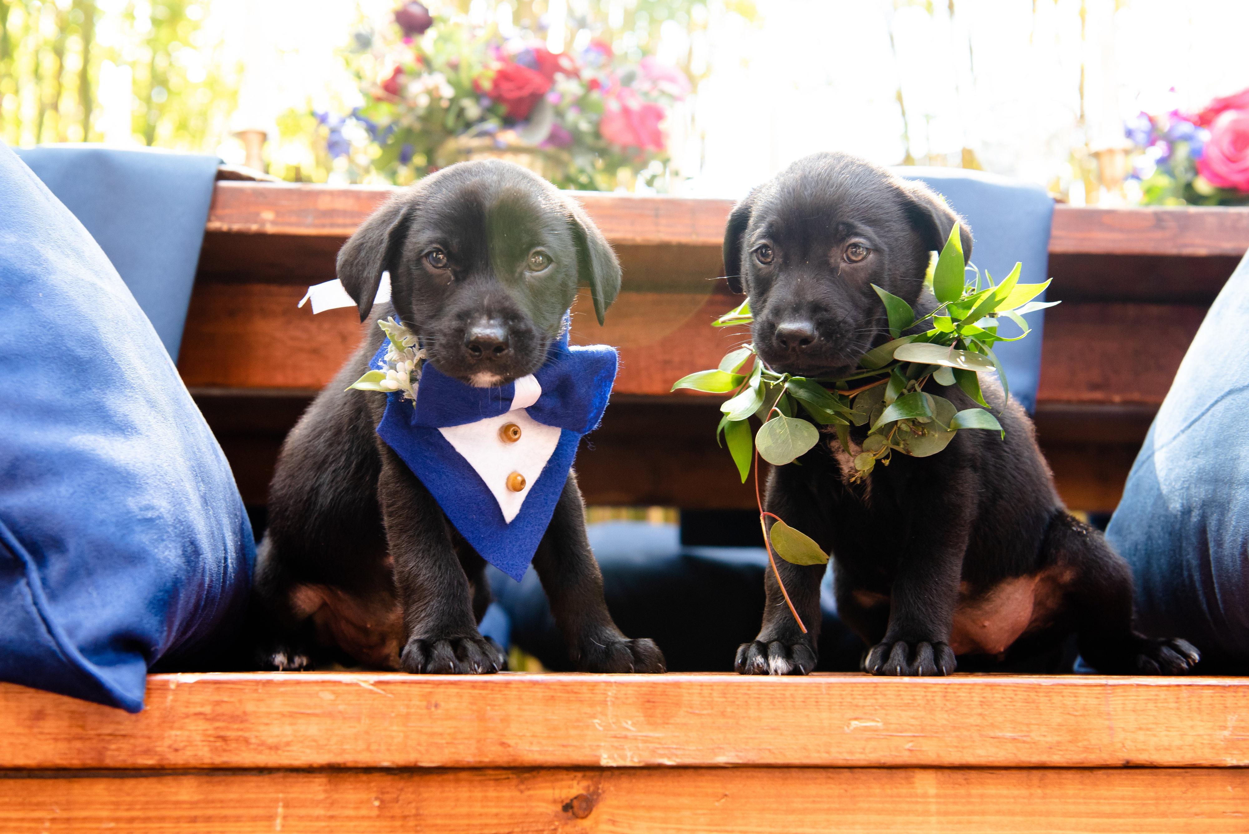 Boho chic dog wedding puppies