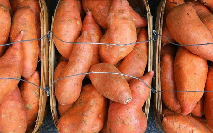 Mississippi Sweet Potatoes: A Tasty Tradition