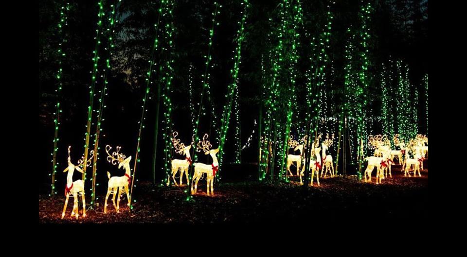 Christmas Lights Columbia Zoo