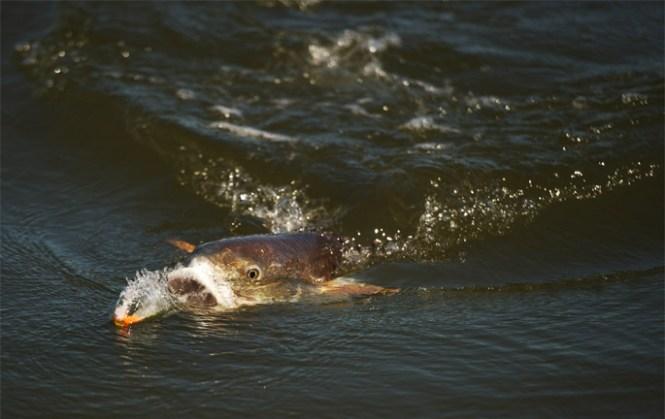 Chandeleur Islands Fishing Charters Venice Charter