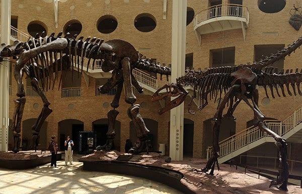 Fernbank Museum of Natural History.
