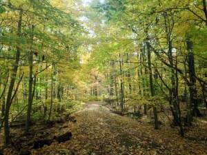 Wedgewood Trail