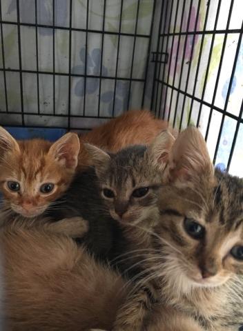 AWA Kittens