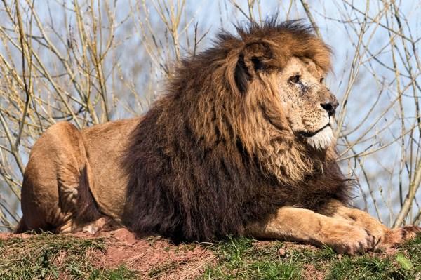 South Lakes Safari Zoo - Animal Wildlife Park & Feeding ...