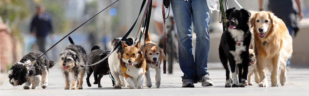 Pet Care Online: Building a Useful Pet Care Info Site