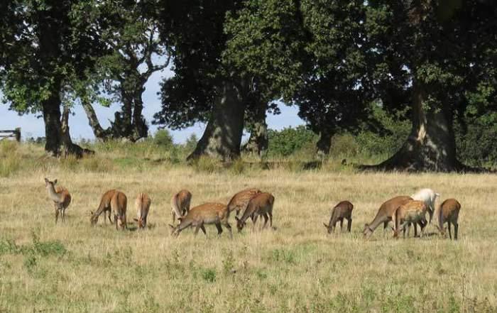 A Busman's holiday. Deer at Arne © Colin Church