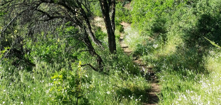 Trail Work Day – Oakley Trail  August 20, 2016 Sat 8am