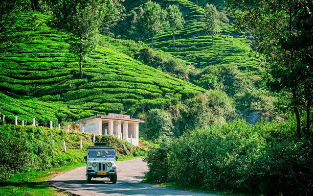 A Mahindra vehicle driving amongst the tea plantations in Wayanad, Kerala, India.