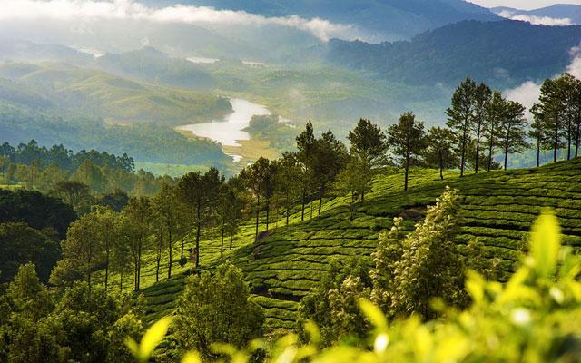 AN amazing view of  tea estate in Munnar, Kerala