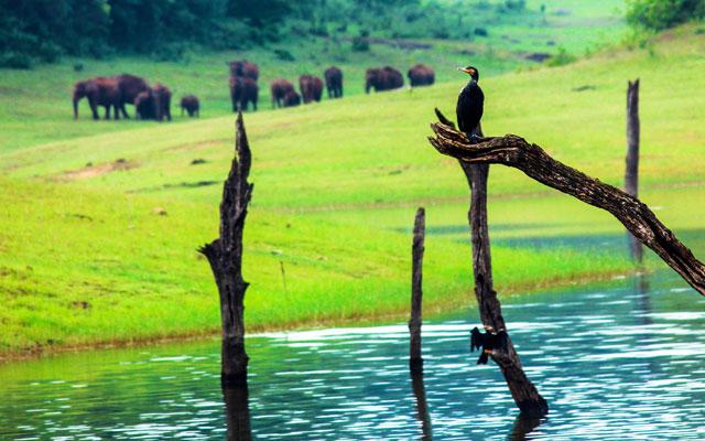 Flora and fauna of Periyar wildlife sanctuary and national park, Kerala