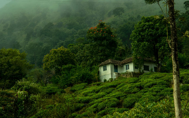 A home stay in a tea estate in the district Wayanad