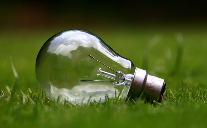 lightbulb lying in grass