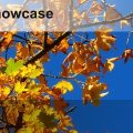 CILIP Showcase Autumn