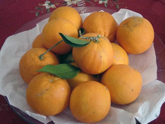 Foto di un piatto di arance