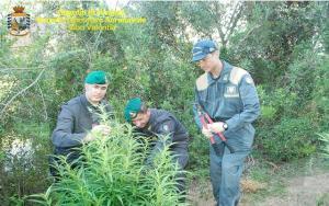 Scoperte dalla Guardia di Finanza due piantagioni di marijuana