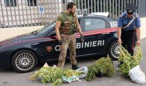 Nascondeva e coltivava marijuana in casa, arrestato pregiudicato 48enne