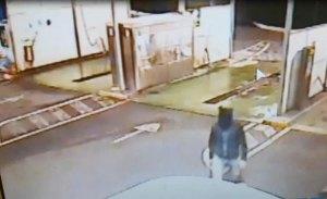 Tentò una rapina in un autolavaggio mascherato da topo, 37enne fermato