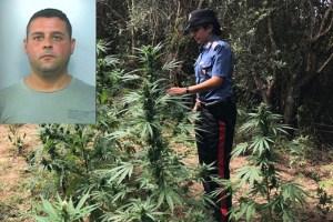 Sorpreso a coltivare canapa indiana, 37enne arrestato