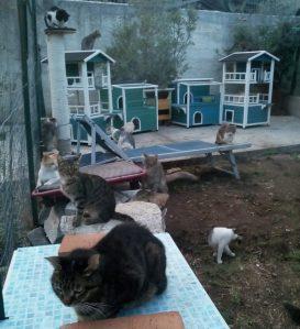 """Buon 2019 dall'Associazione animalista """"Su la zampa"""""""