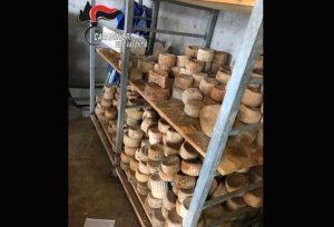 Controlli dei Nas di Catanzaro in un caseificio, sequestrati prodotti in cattivo stato di conservazione