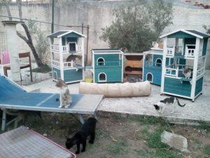 """Caccia alle uova al rifugio dell'associazione animalista """"Su la zampa"""" a Montauro"""