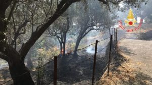 Vasto incendio nel catanzarese, in fumo un ettaro e mezzo di uliveto e macchia mediterranea
