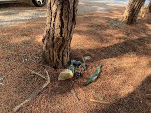 FOTO NEWS | Parcheggi selvaggi e immondizia nella pineta di Soverato