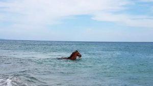 Cavallo sfugge al fantino e finisce in mare