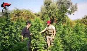 Coltivavano piante di marijuana, due persone arrestate
