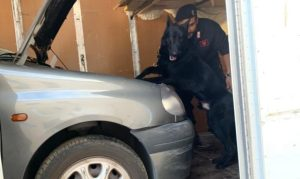 Il cane Black fiuta cocaina in un autocarro e inguaia padre e figlio