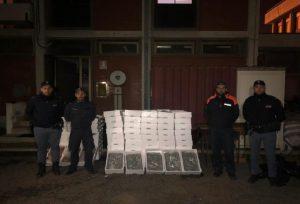 Sequestrati oltre 600 kg di novellame di sarda e gamberi