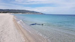 FOTO NEWS | Squalo nel mare di Soverato