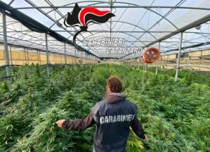 """Operazione """"Oro verde"""", sequestrate 10mila piante di cannabis nel catanzarese: 54enne arrestato"""