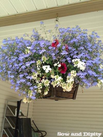 reviving hanging baskets (1)