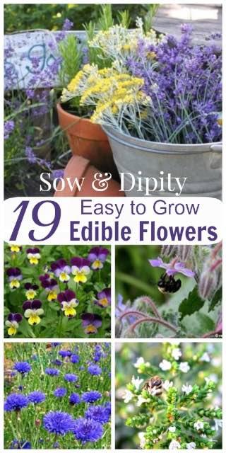 19 Edible Flowers
