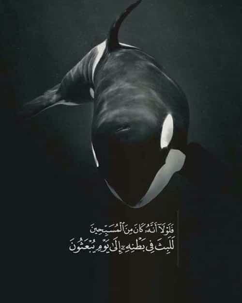 صور جديدة اسلامية مكتوب فيها ايات قرآنية