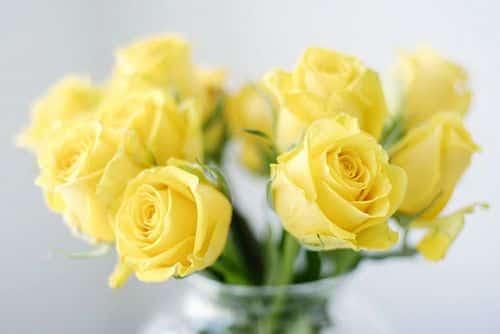 أجمل صور عن الورد منتهى الجمال