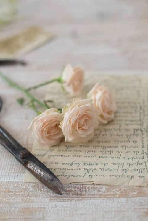 صور كشخه عن الورد