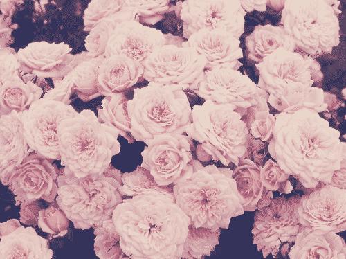 صور خقق ورد جميل