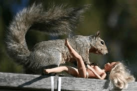 Don't worry Barbie. There's an IDC-10 for that squirrel encounter!