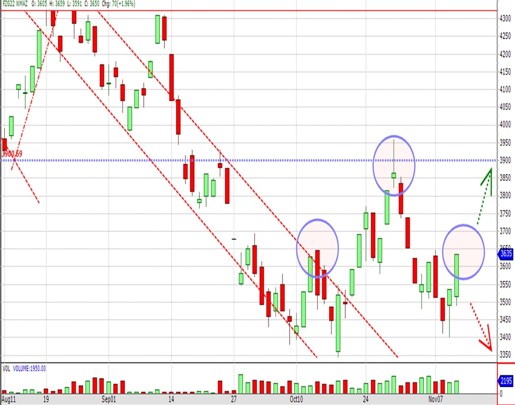 December White Maize Technical Chart