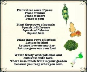 plant three rows