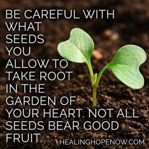 seeds in garden2