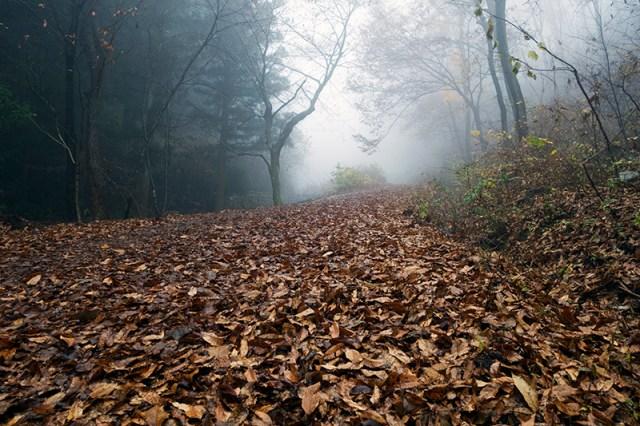 오솔길을 덮은 가랑잎